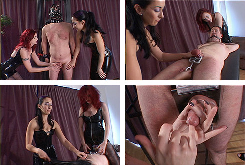 Two mistress cock torture